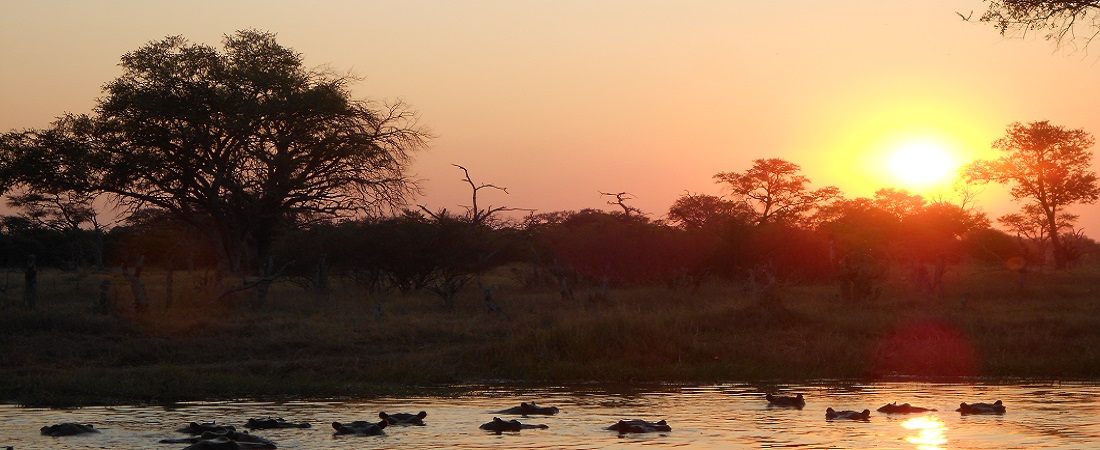 Beauty of Nature: Enjoy African Sunsets over the Okavango Delta in Botswana